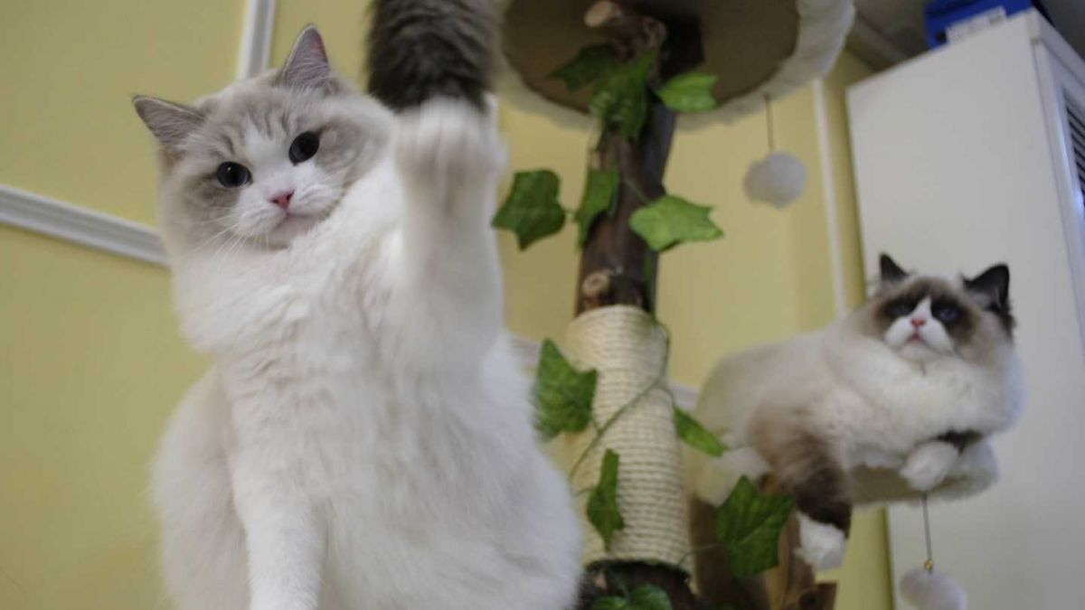 Así celebran en redes el Día Internacional del Gato