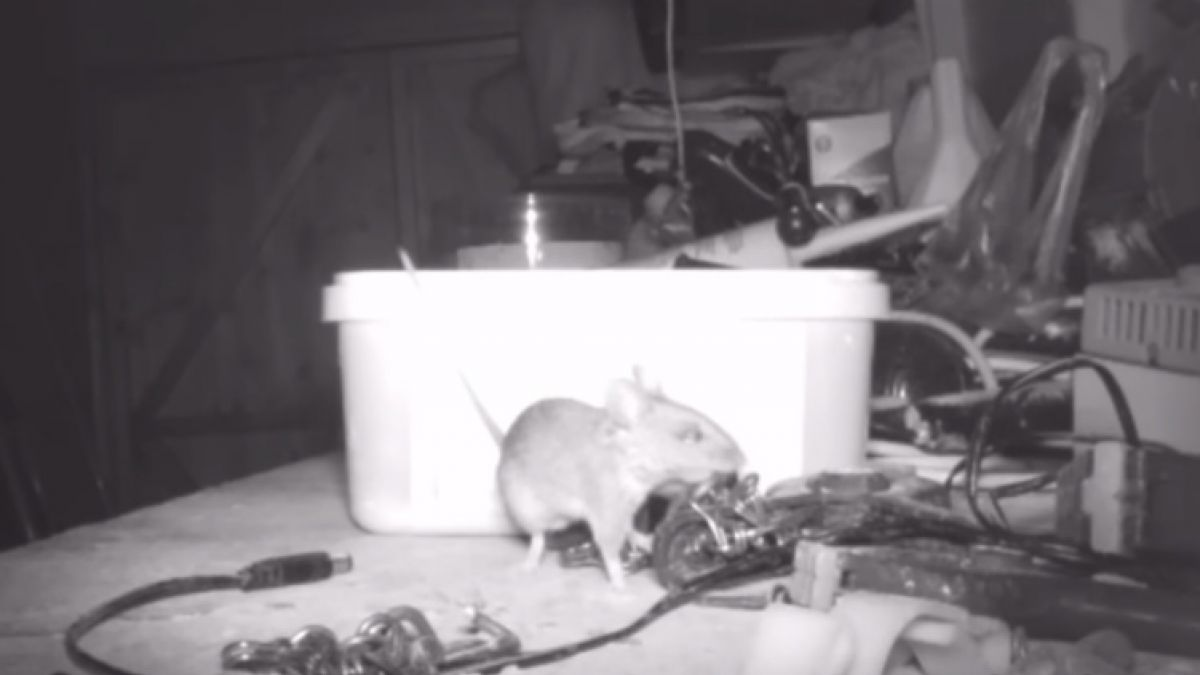 Ratón ordena objetos de cobertizo