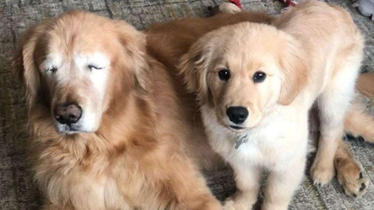 Perro pierde la vista; su mejor amigo es su lazarillo (FOTOS)
