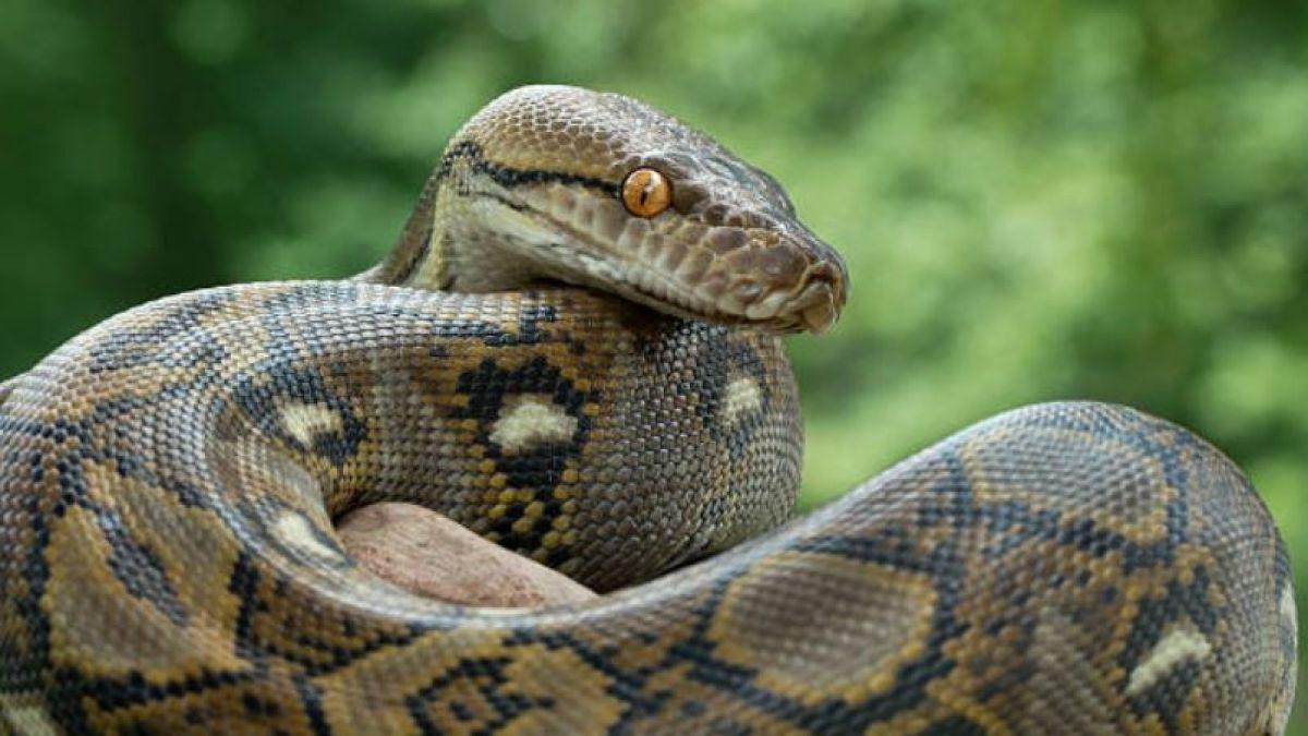 Resultado de imagen para serpiente