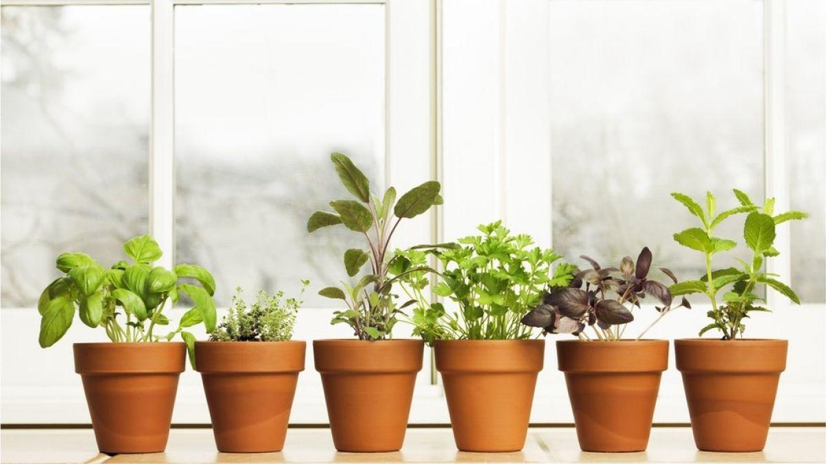 4 problemas de salud comunes que puedes aliviar con plantas medicinales