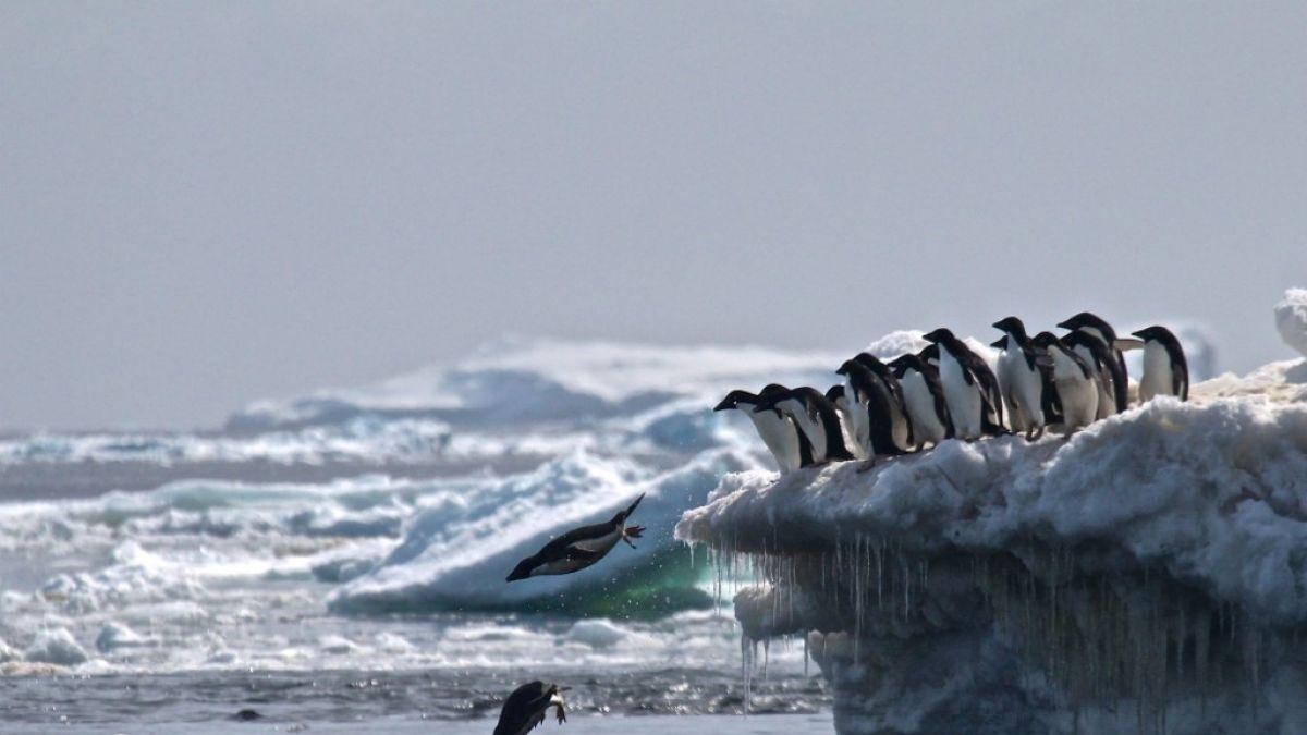 El extraño fenómeno climático que se registró en la Antártica y sus alcances para la investigación