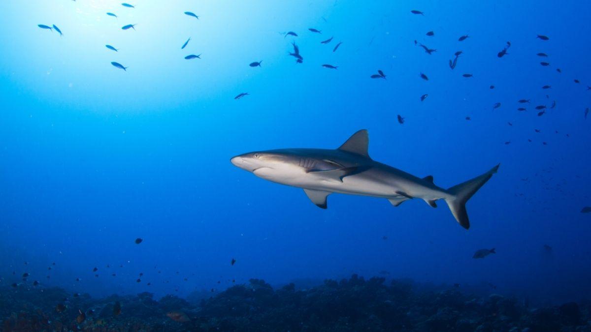 Por qué los océanos se están quedando sin oxígeno (y qué significa esto para la vida marina)