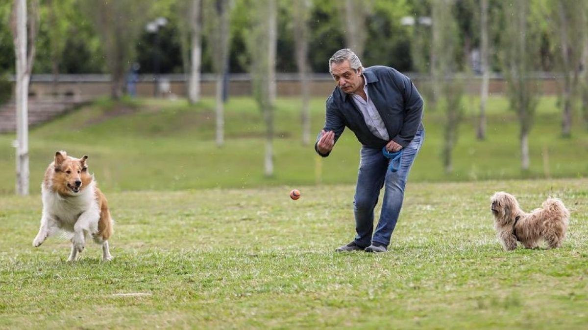 Dylan Fernández, el famoso perro del nuevo Presidente de Argentina que es furor en redes sociales