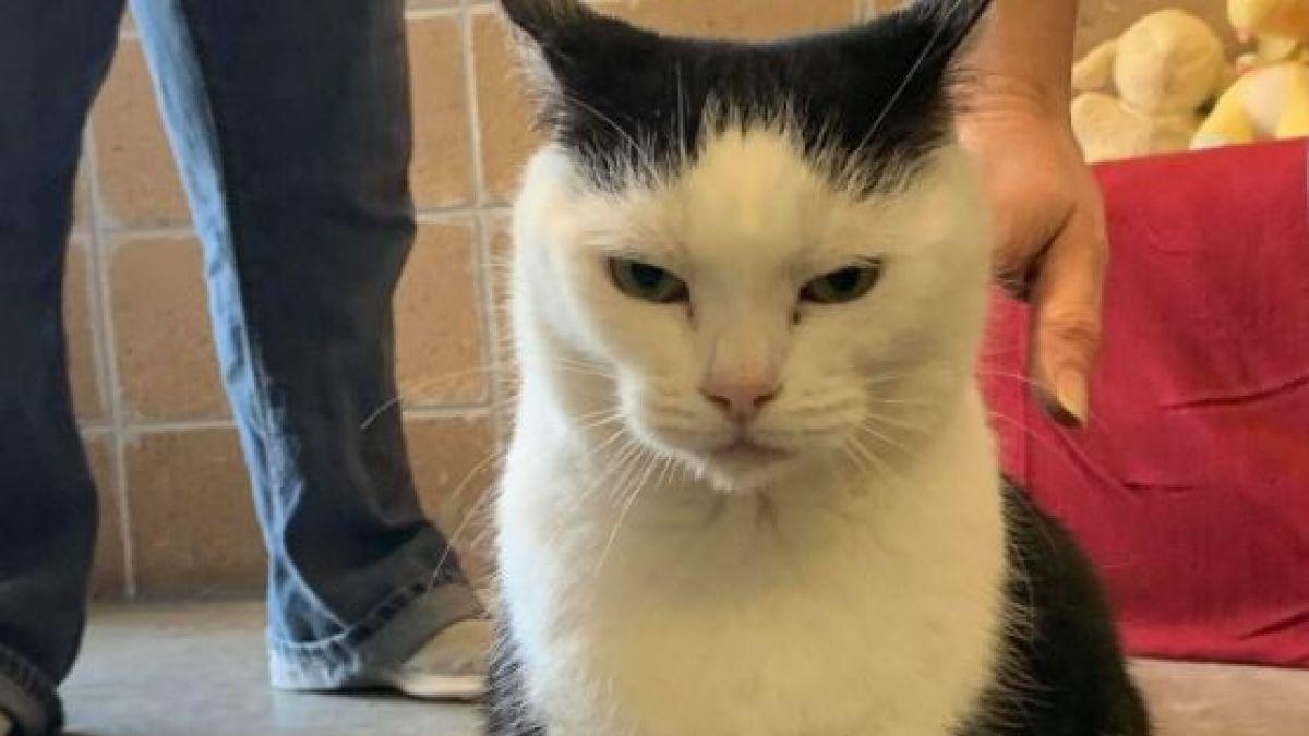 La peor gata del mundo busca un hogar: Dicen que no tiene corazón, pero sí hábitos diabólicos