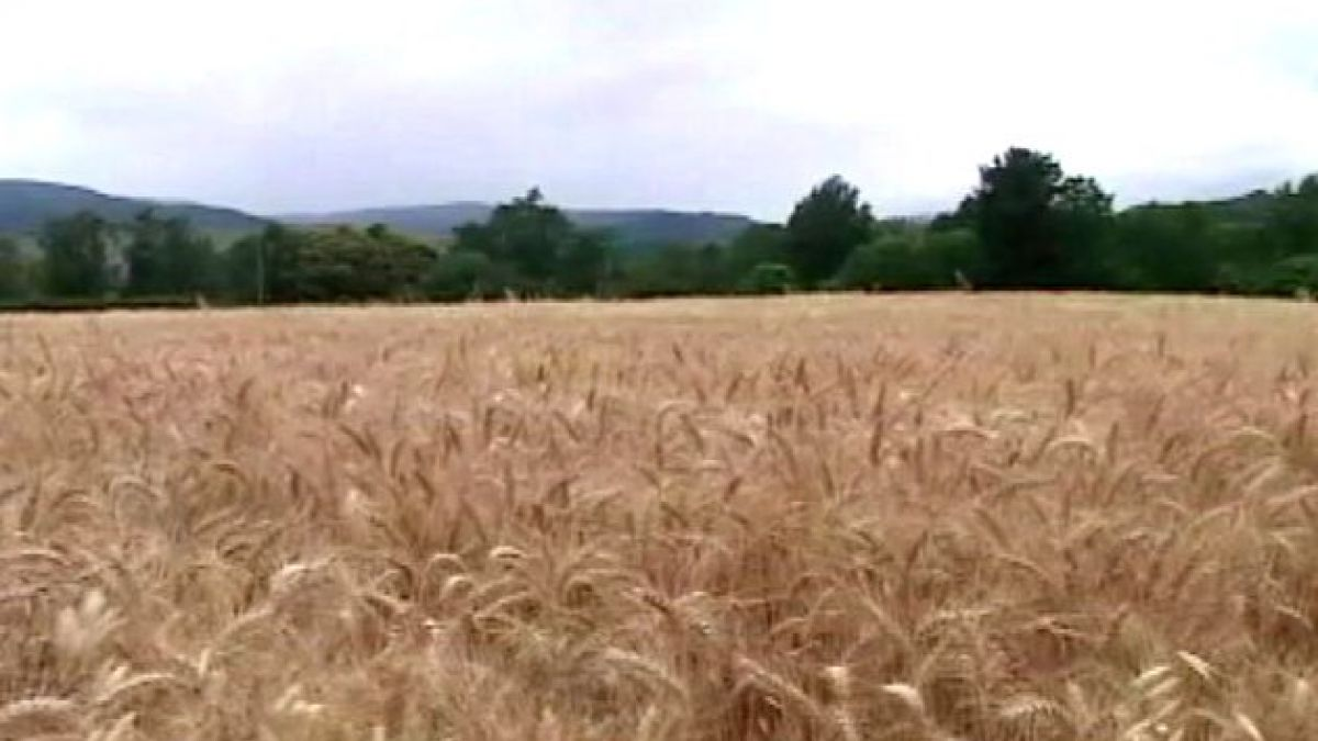 Agricultores argentinos afectados por la sequía apuestan a trigo