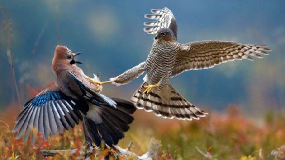 8 sorprendentes fotografías de la naturaleza