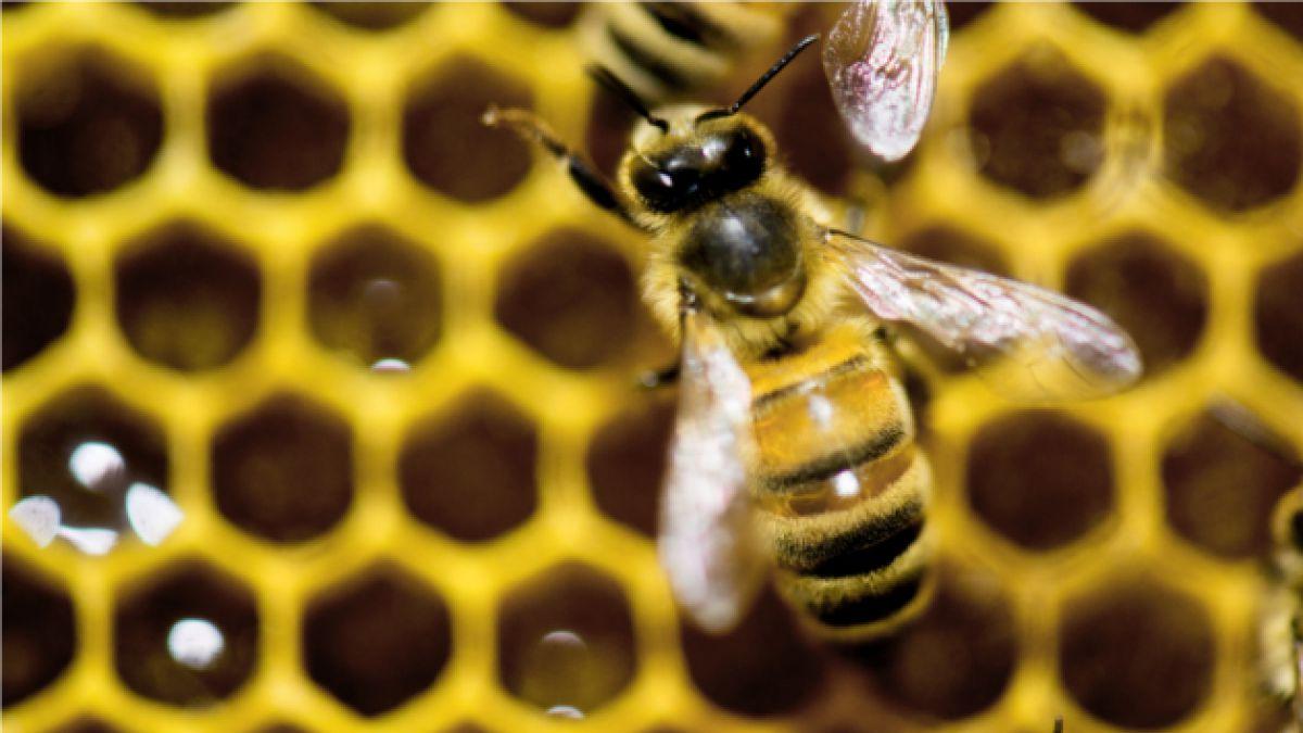 Justicia europea confirma la restricción de pesticidas nocivos para las abejas