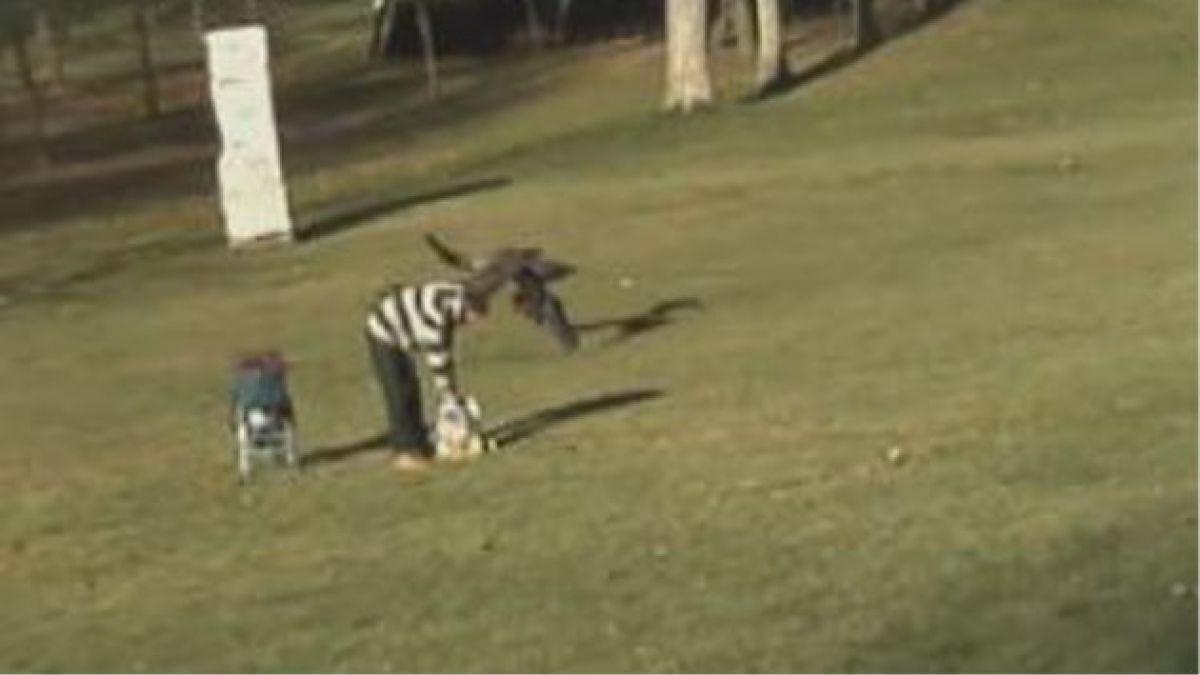Usuarios aseguran que video de águila llevándose a niño sería falso