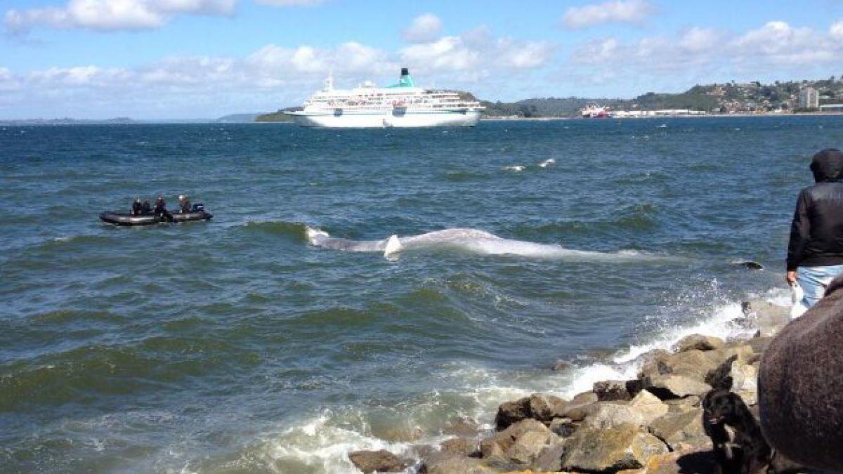 Mujer sufre inesperada bofetada de una ballena