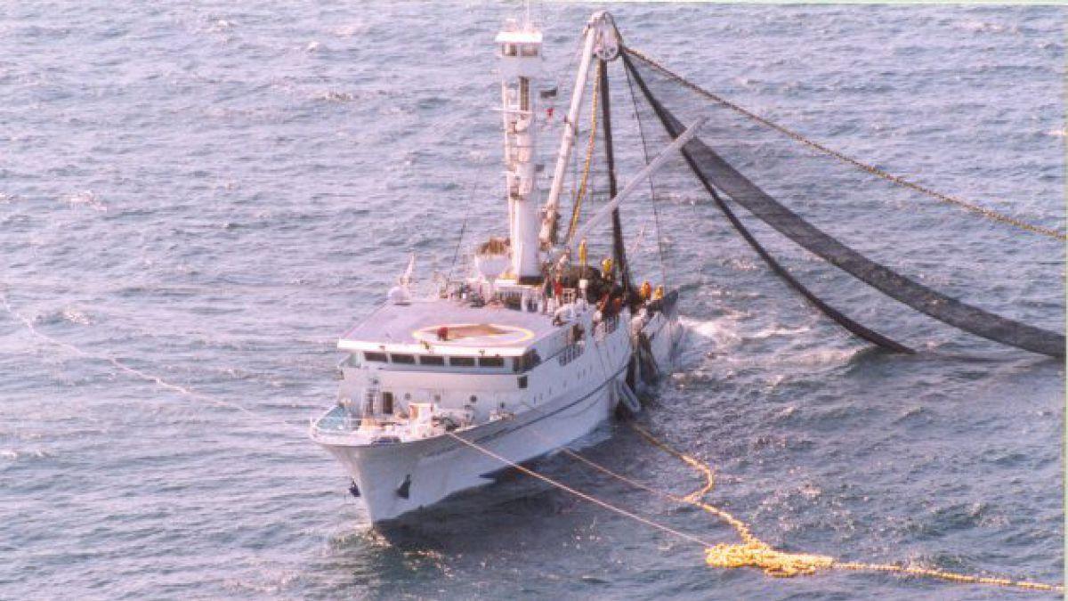 Sobrepesca está encogiendo las especies y extinguiéndolas