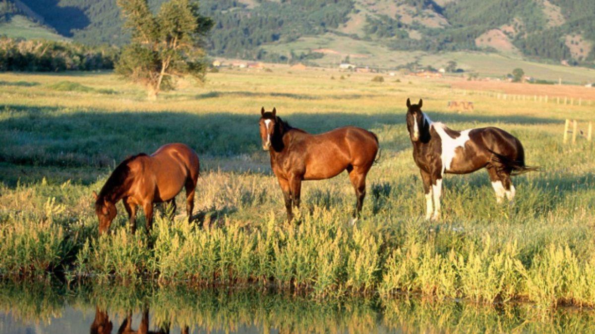 Polémica por presunta caza de caballos salvajes en terrenos donados por Douglas Tompkins