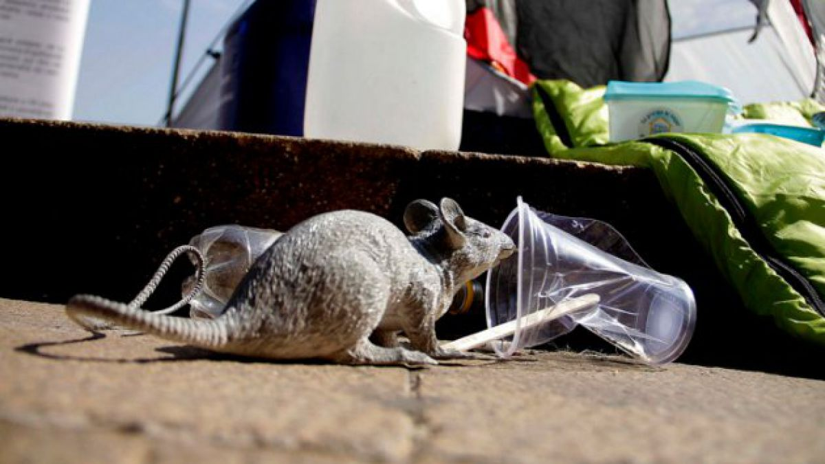 Confirman dos nuevos casos fatales por hanta en La Araucanía