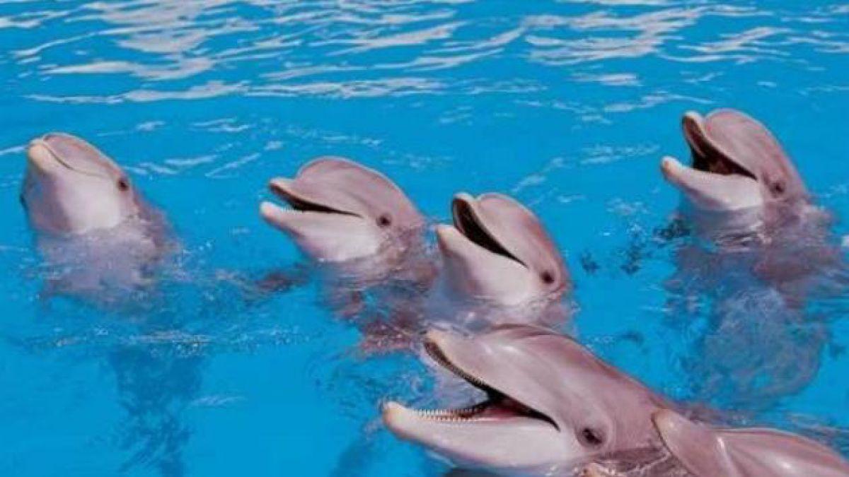 Delfines entrenados por Armada ucraniana en Crimea también se suman a fuerzas rusas