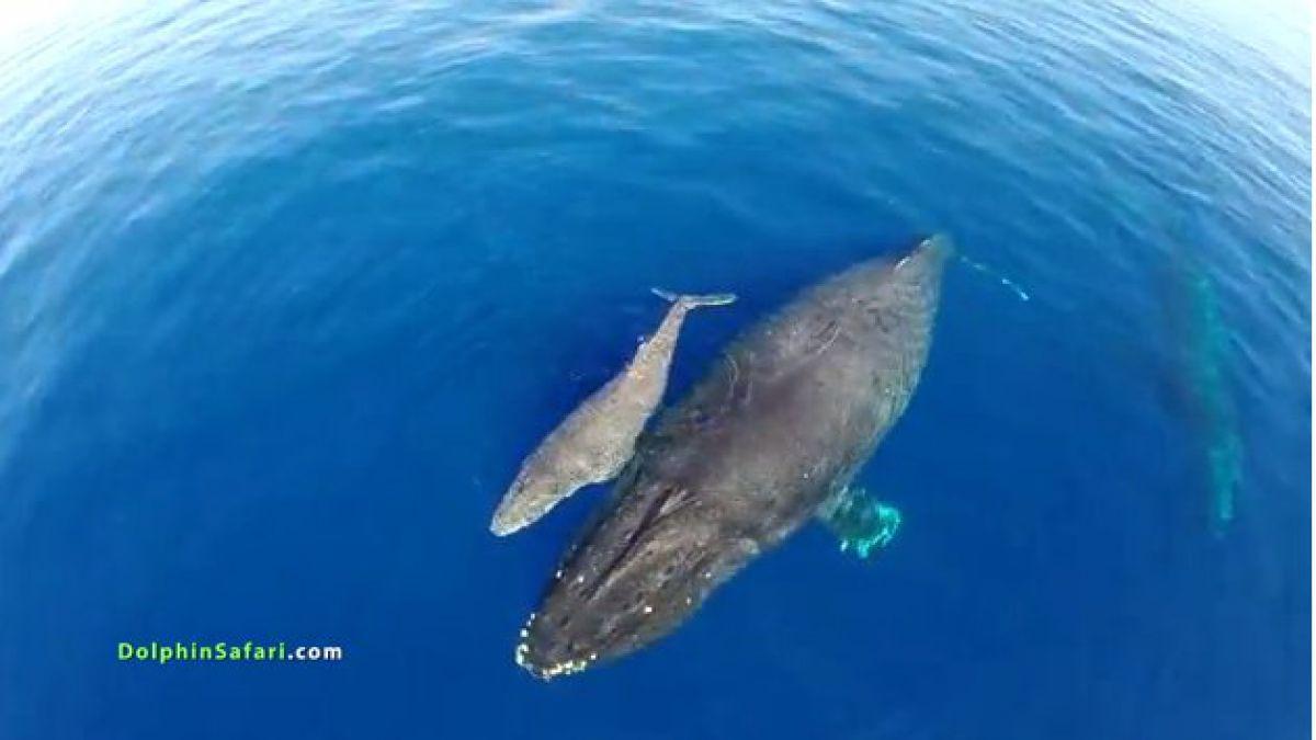 Drone capta manada de delfines y ballenas