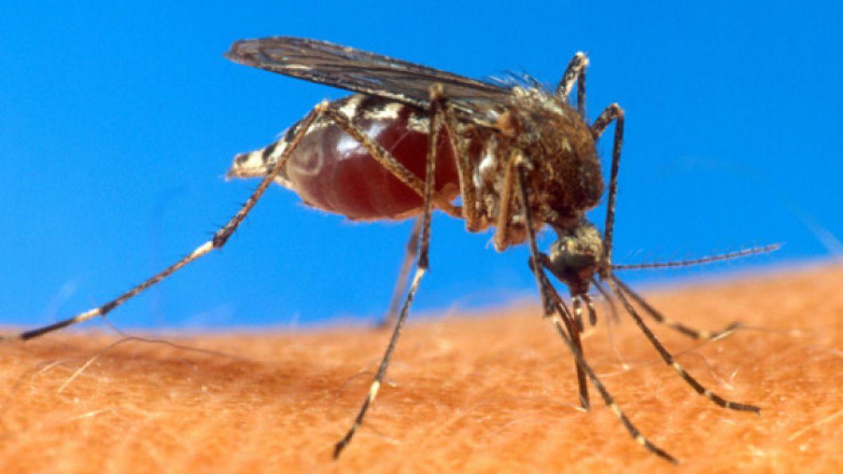 2 muertos deja el dengue en Río de Janeiro