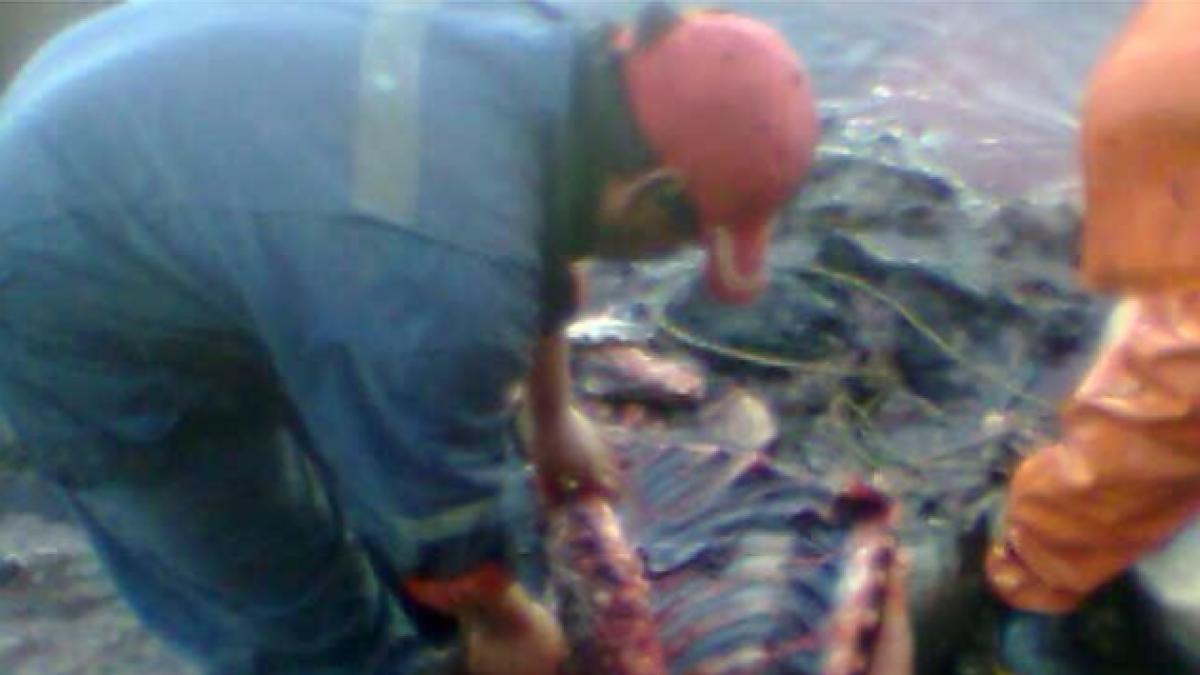 Acusan a pescadores de asesinar pingüinos y lobos marinos para usarlos como carnada