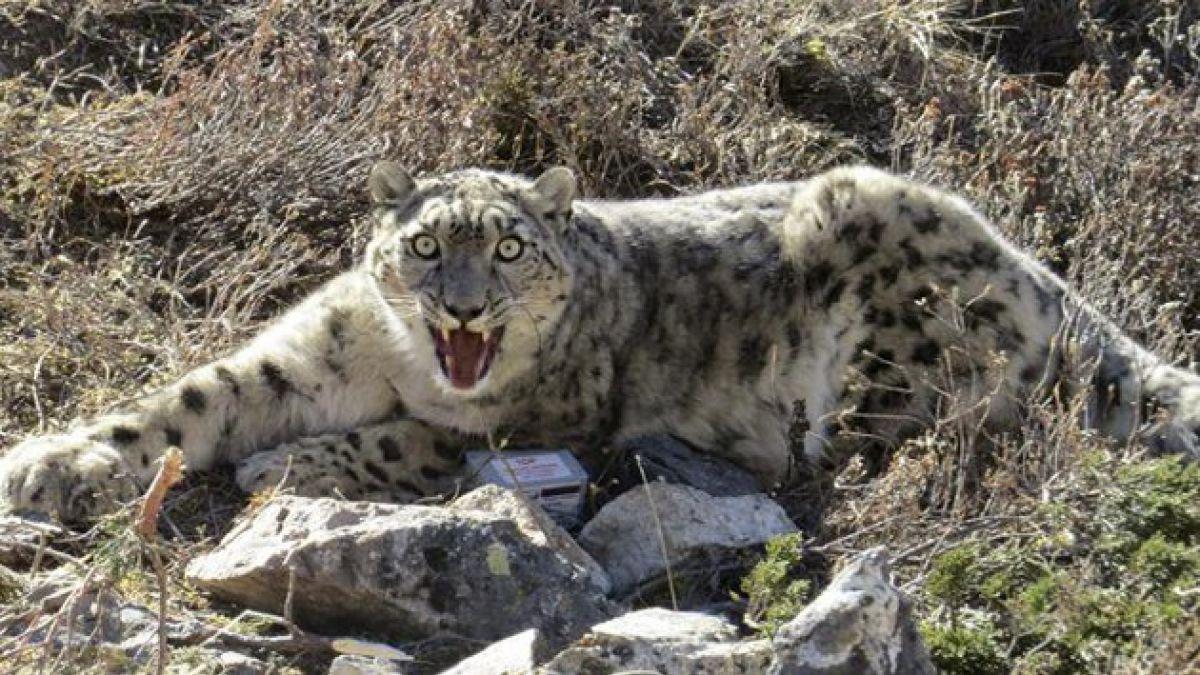 Población de más del 75% de los depredadores del planeta está en descenso