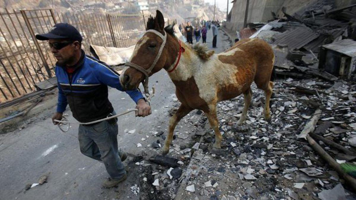 Fotos conmovedoras de personas salvando a sus mascotas tras incendio
