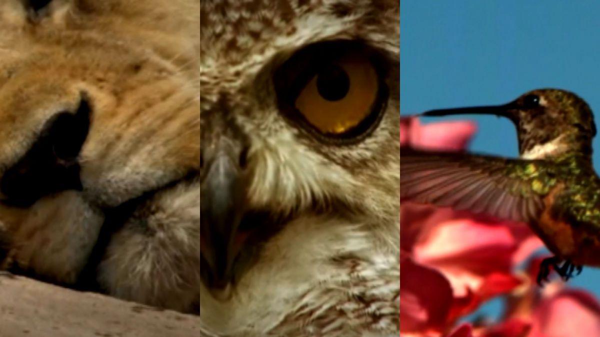 VIDEO: Los mejores registros de la vida salvaje en el día de la Tierra