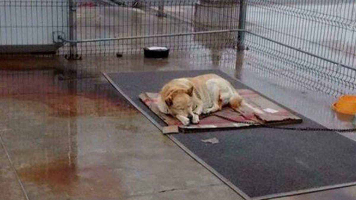 Presión de animalistas en redes sociales cambió destino de perro en una empresa
