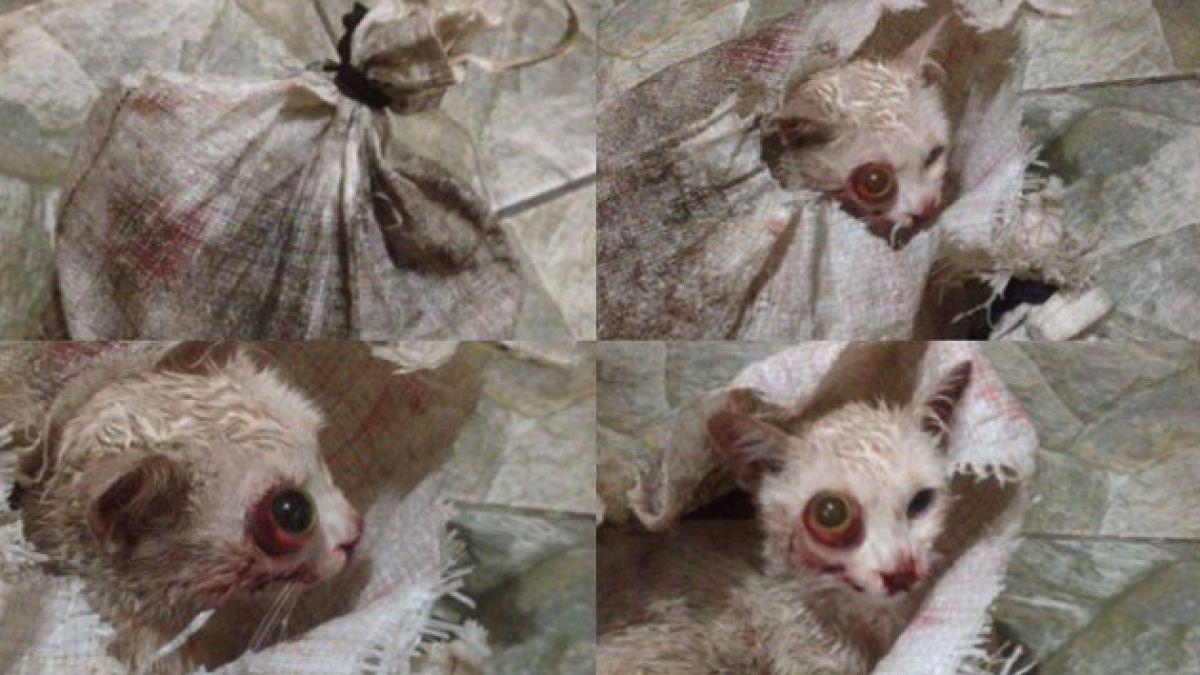 Impactante caso de maltrato animal en Calama