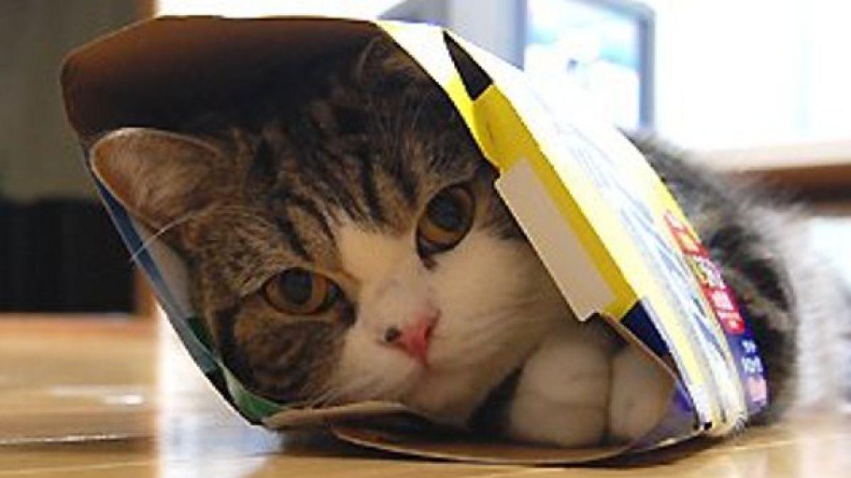 Día de los gatos: los 10 videos más divertidos y tiernos