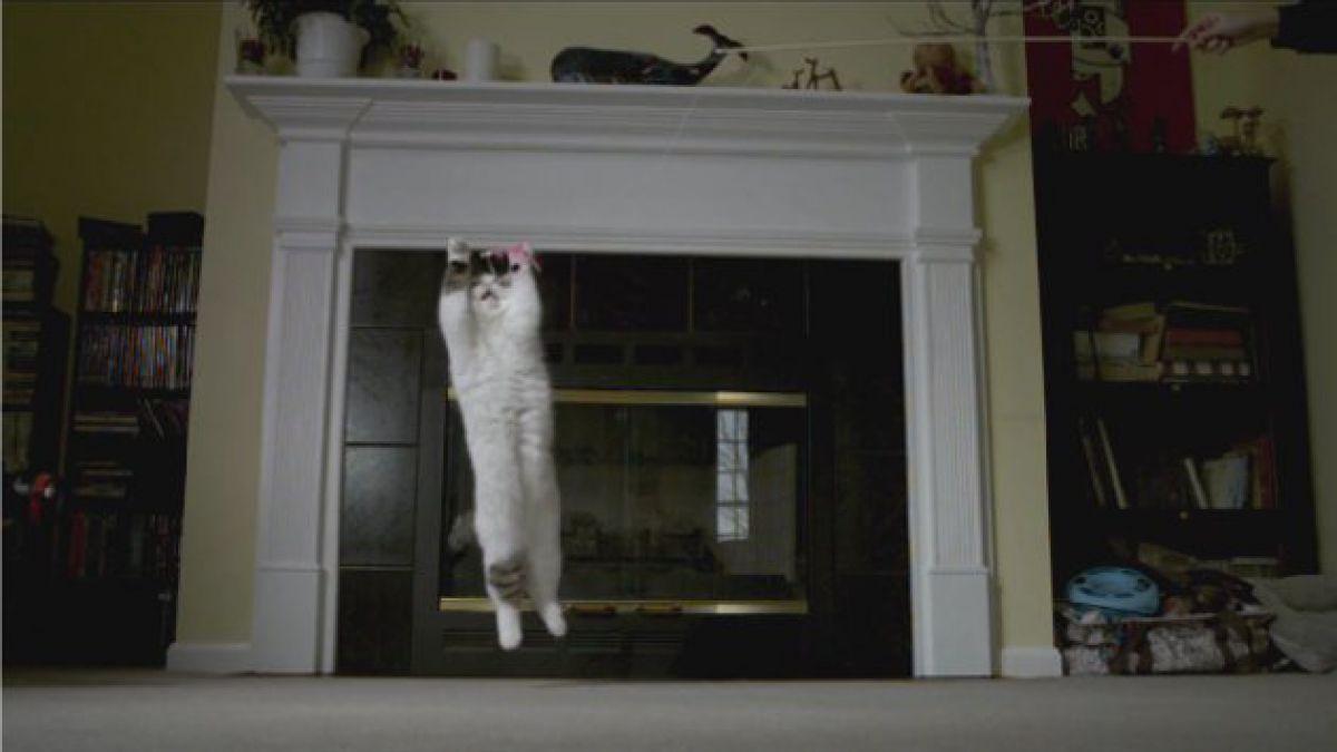 Notables destrezas de los gatos en slow motion