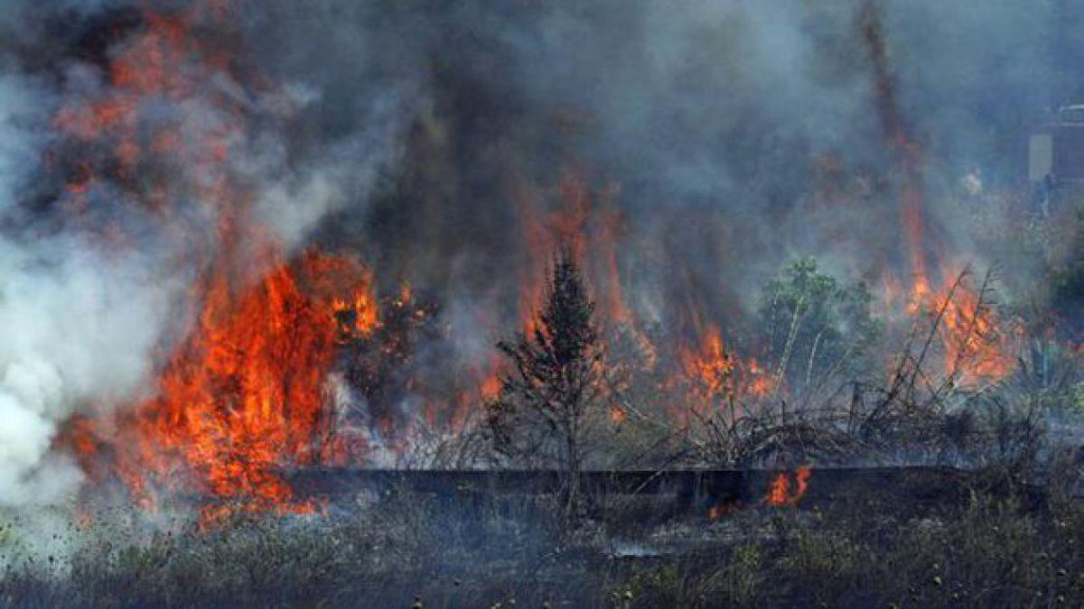 Onemi levanta Alerta Roja Provincial por incendio forestal en Concepción