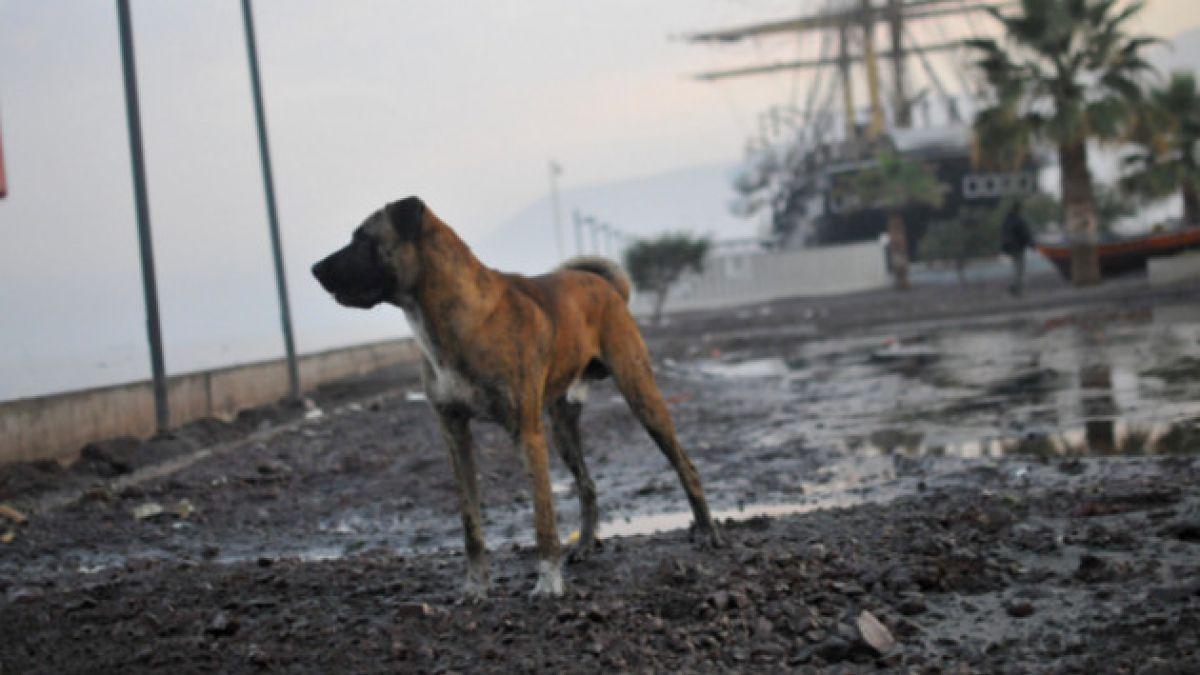 Proponen ley para castigar el abandono de animales domésticos