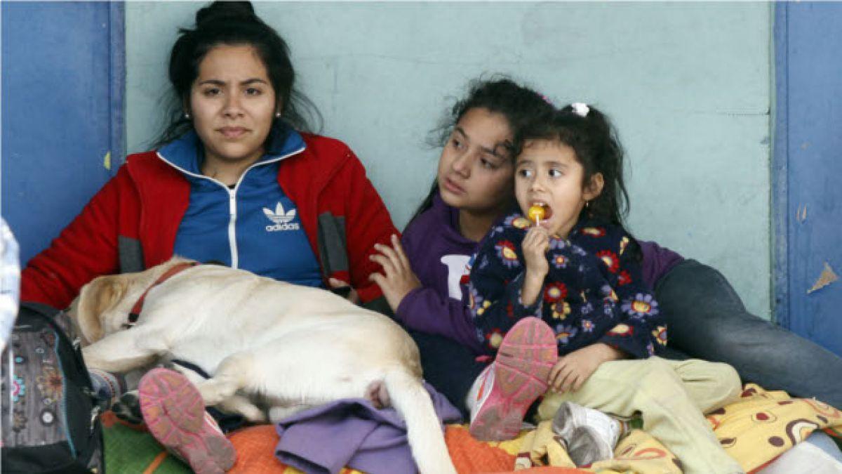 Así se está organizando la ayuda para mascotas afectadas por incendio en Valparaíso