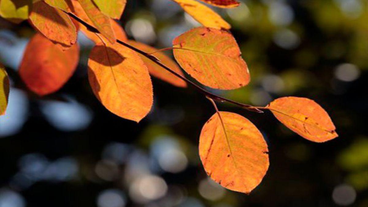 Este martes comenzó oficialmente el otoño