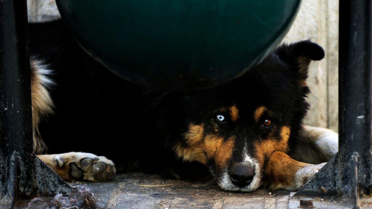 Inédito proyecto del gobierno para esterilización de perros callejeros divide a ONGs animalistas