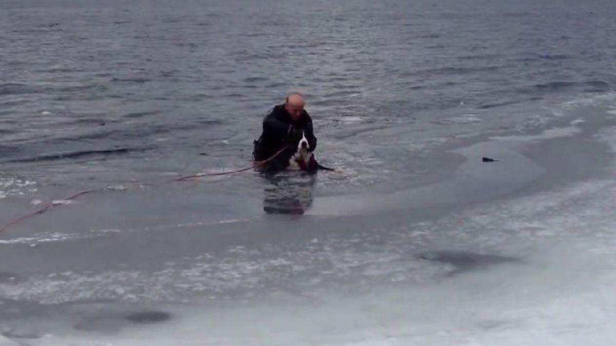 Rescatan a perro de morir congelado en lago
