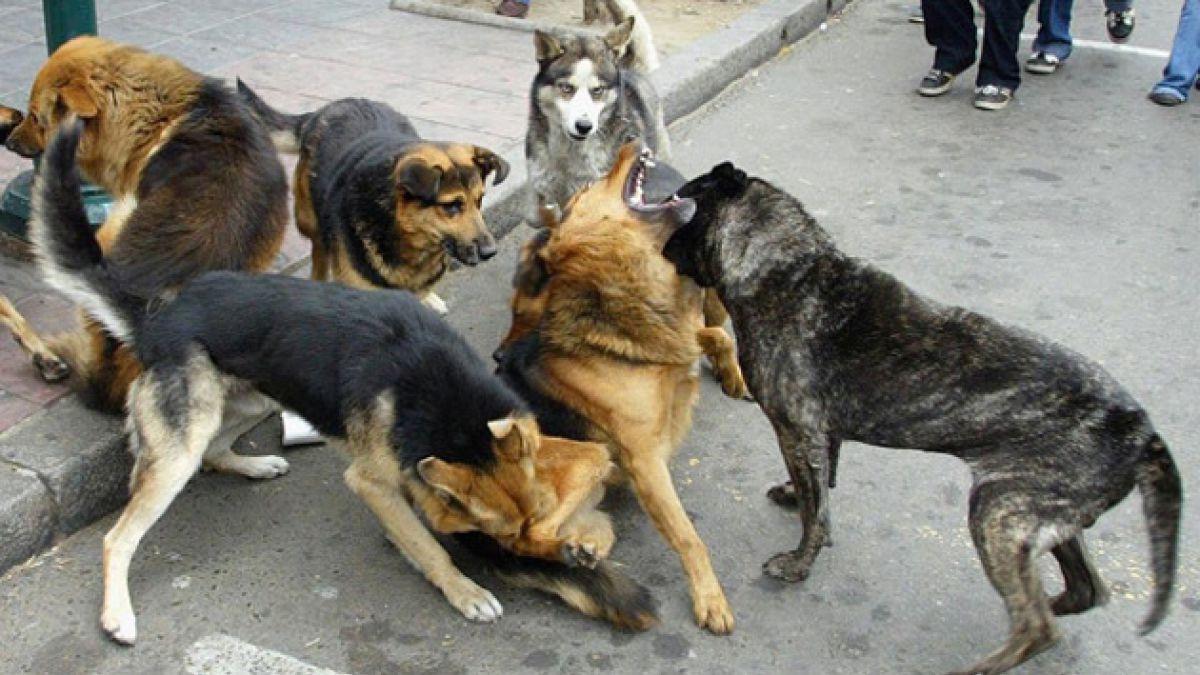 Suspenden entrada en vigencia de decreto que declara dañinas a jaurías de perros asilvestrados