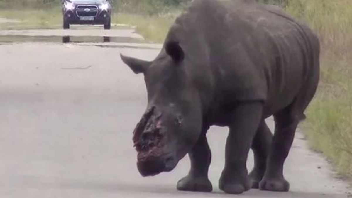 ¿Nos acercamos a la extinción de los rinocerontes?
