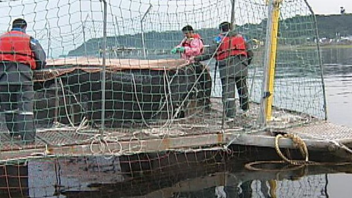 Gremio salmonero se reúne con empresas afectadas por el alga nociva