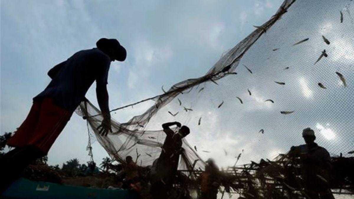Llueven peces en Sri Lanka durante una tormenta