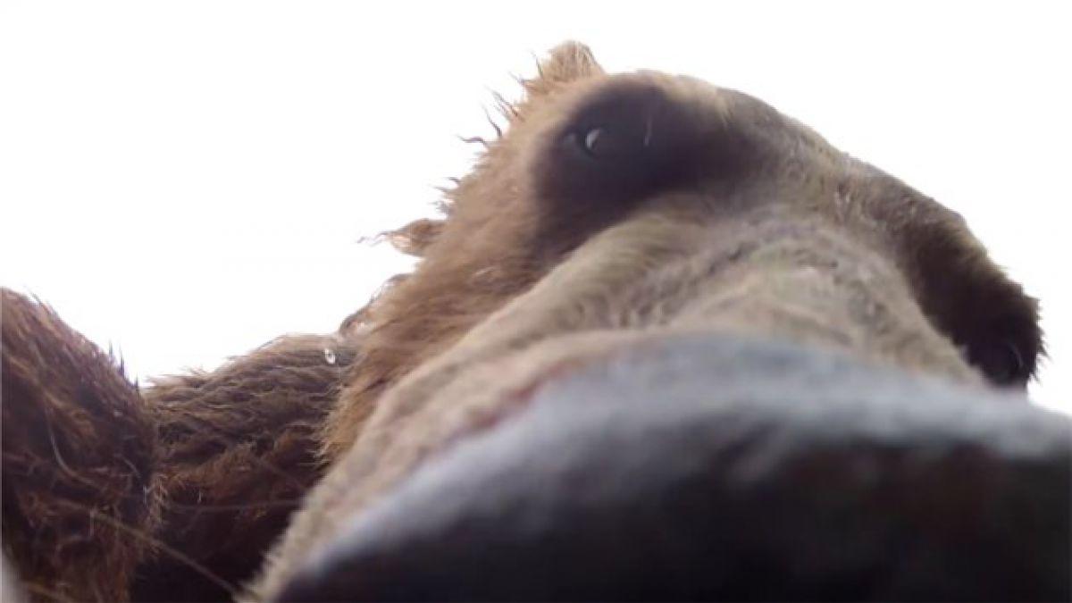VIDEO: Animales y vida salvaje tras el lente de la videocámara del momento