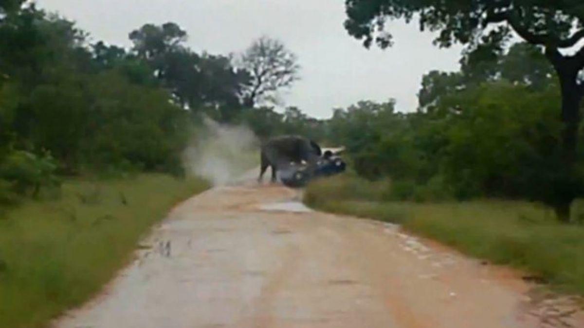 [VIDEO] Elefante ataca automóvil ante aterrorizados turistas