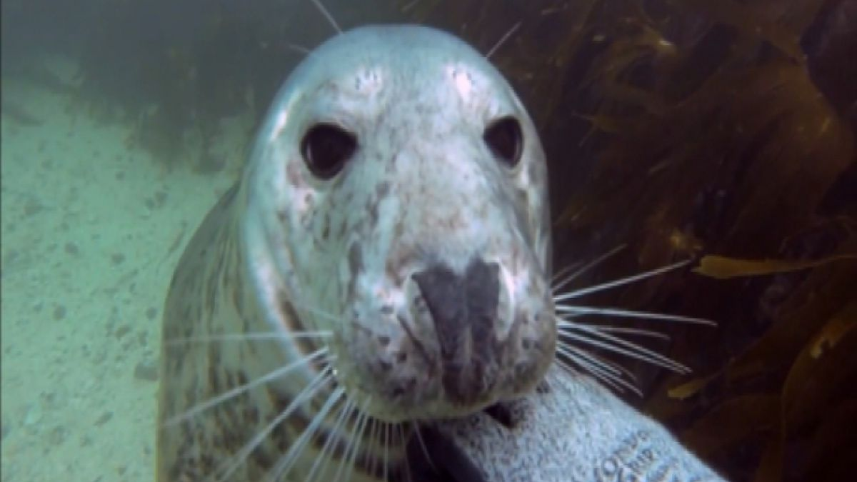 VIDEO: Las 7 selfies más notables del mundo animal