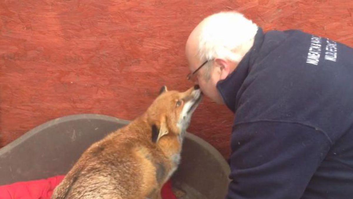 Emotivo encuentro entre anciano y zorro que se comporta como mascota
