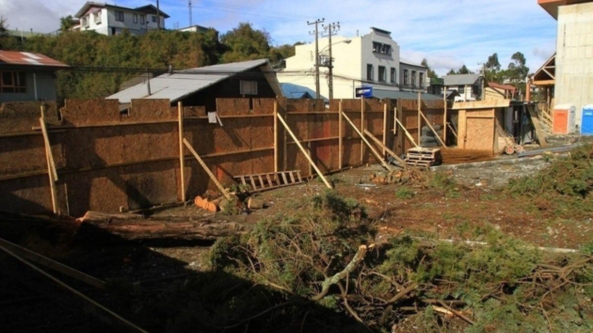 Fotógrafo denuncia tala ilegal de alerce en Puerto Varas