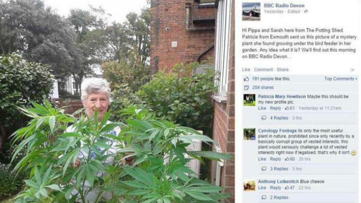 Mujer inglesa descubre que posee cultivo de marihuana gracias a Facebook