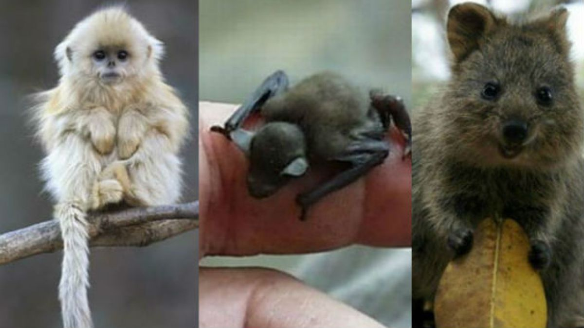 Diez animales raros que están cerca de extinguirse