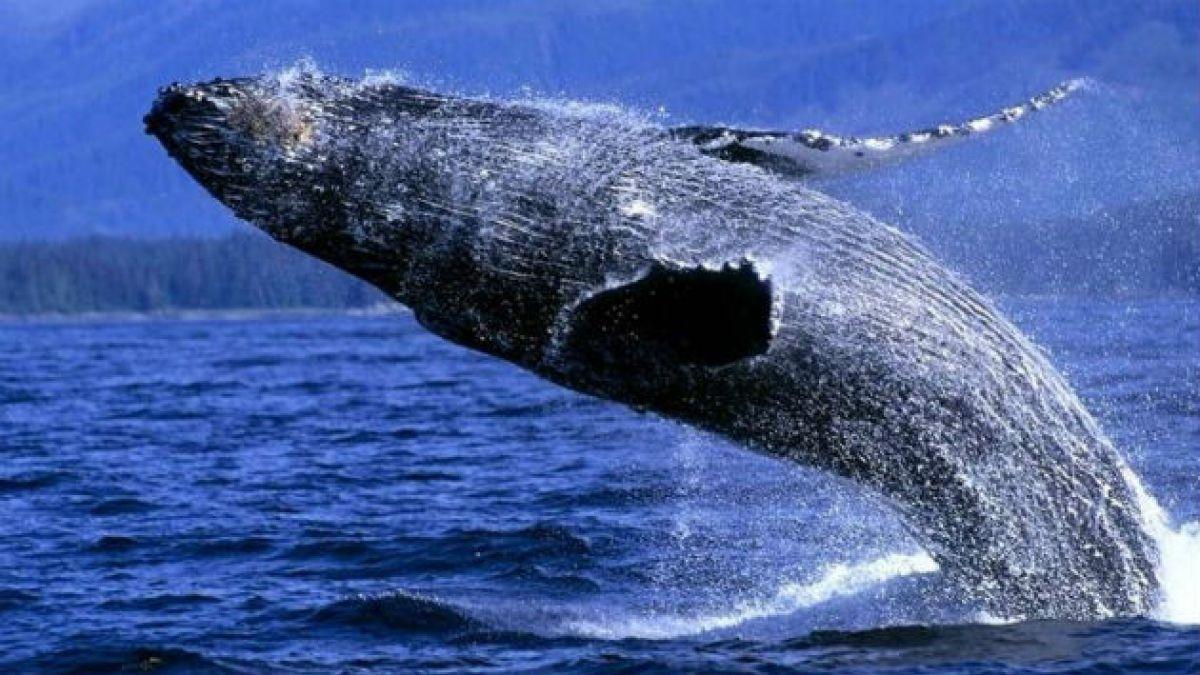 Obama crea la mayor reserva marina del mundo en el Pacífico
