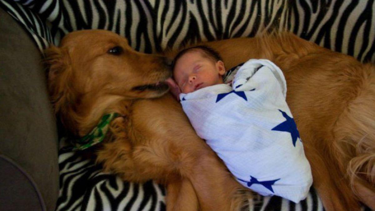 (FOTOS) ¿Por qué los niños necesitan tener mascotas?