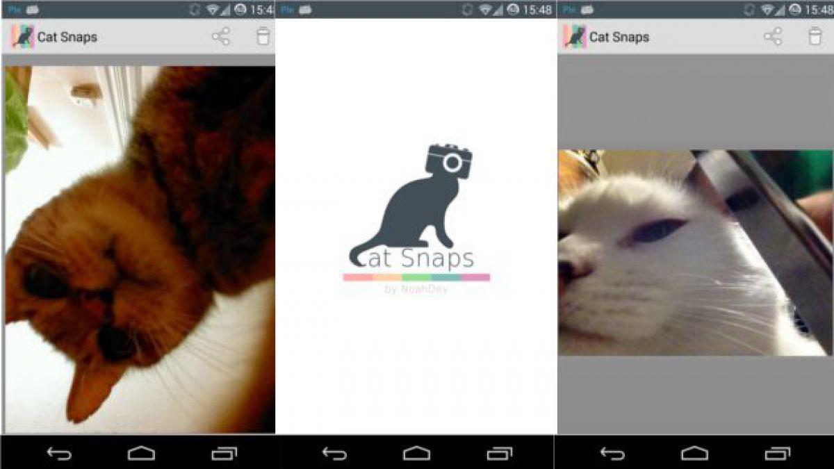 """""""Cat Snap"""": La aplicación de """"selfies"""" para tu gato"""