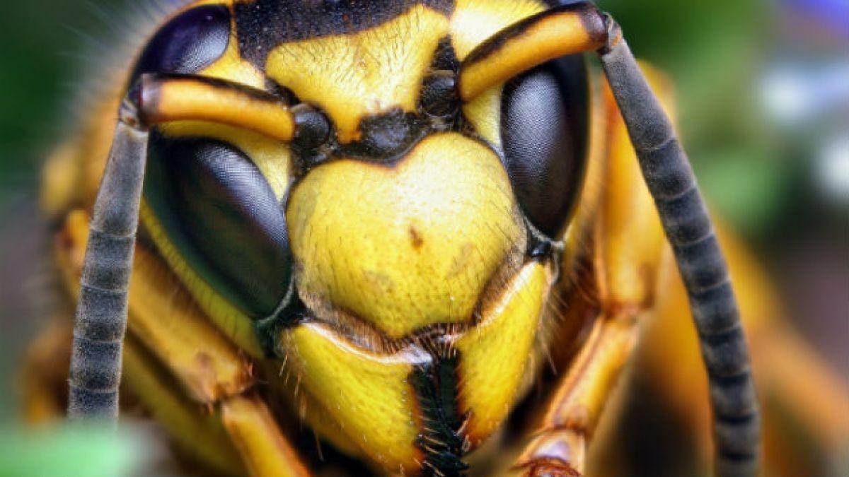 Éstas son las 27 principales especies que amenazan la biodiversidad en Chile