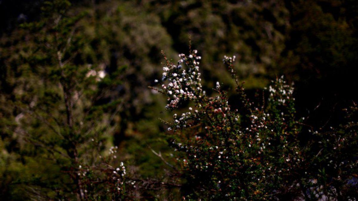 Conaf realiza consulta para ley que la transforma en servicio forestal público